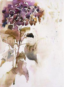 Hortensie I 31 x 42 cm/verk
