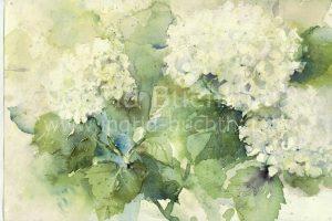 Hortensie weiß 42 x 32 cm