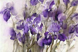 Iris 42 x 32 cm/verk.