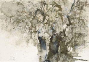 Olivenbäume 42 x 32 cm/verk.