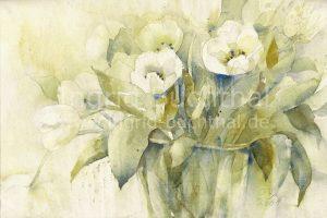 weiße Tulpen II 42 x 32 cm
